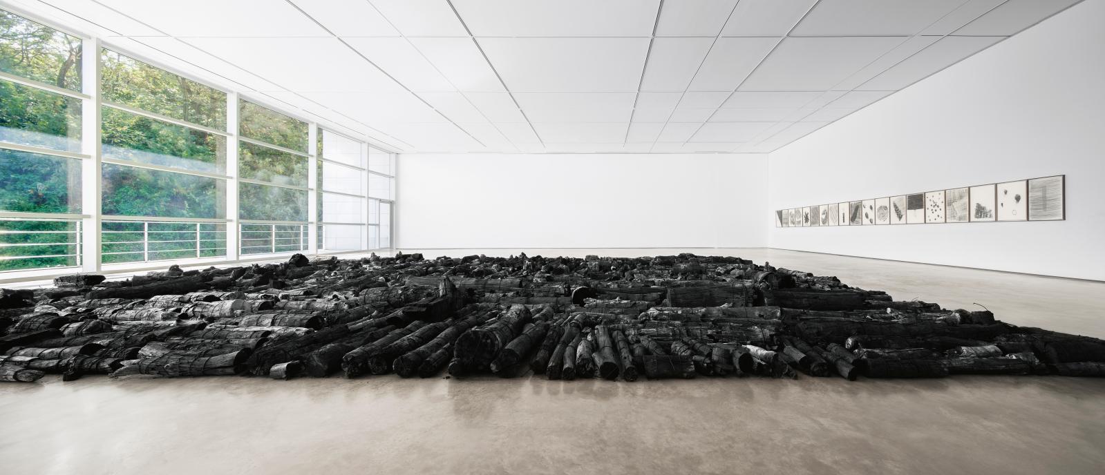 Landscape, troncs d'arbres brûlés, 1800x1600cm. Vue de l'installation au Daegu Art Museum en 2014.