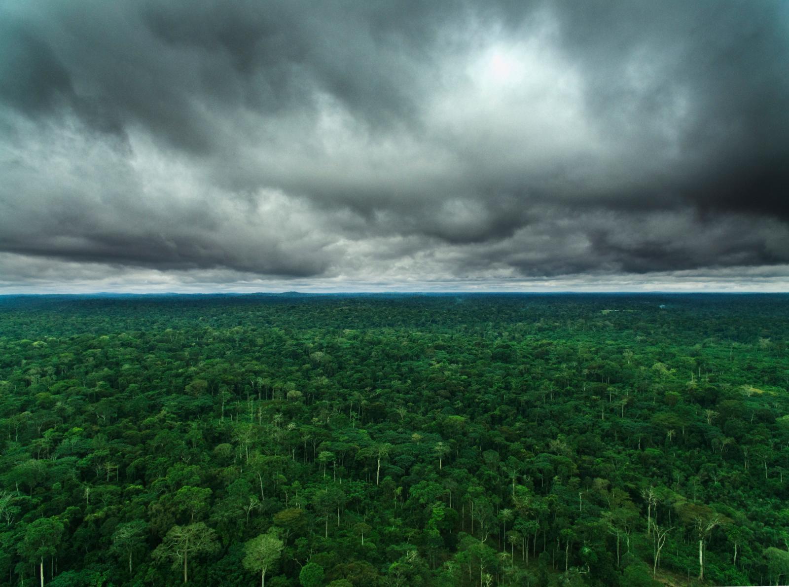 Lu Guang, Congo, second poumon vert de la Terre.