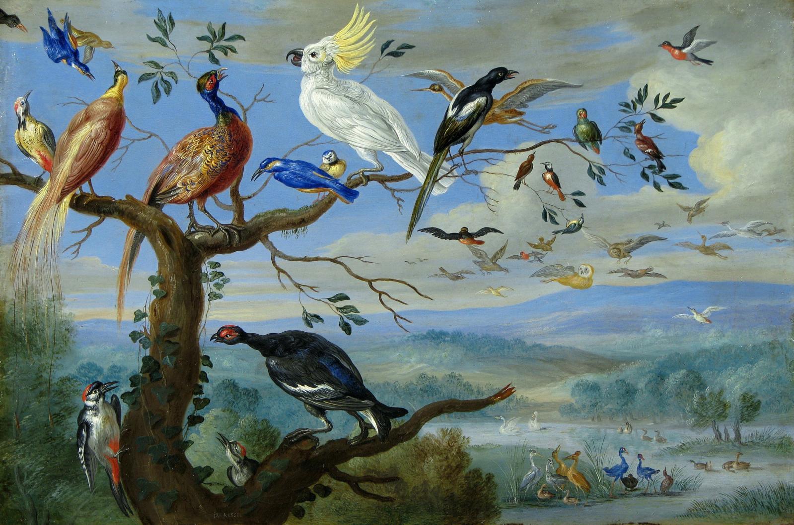 Jan van Kessel le Vieux (1626-1679), Oiseaux exotiques, huile sur cuivre, 19,4x29,1cm, détail. Galerie Costermans, Bruxelles.