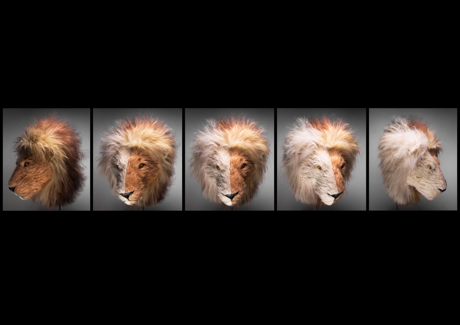 Trophée de Némée, tête de lion réalisée avec un assortiment de plumes. © Paul Baret