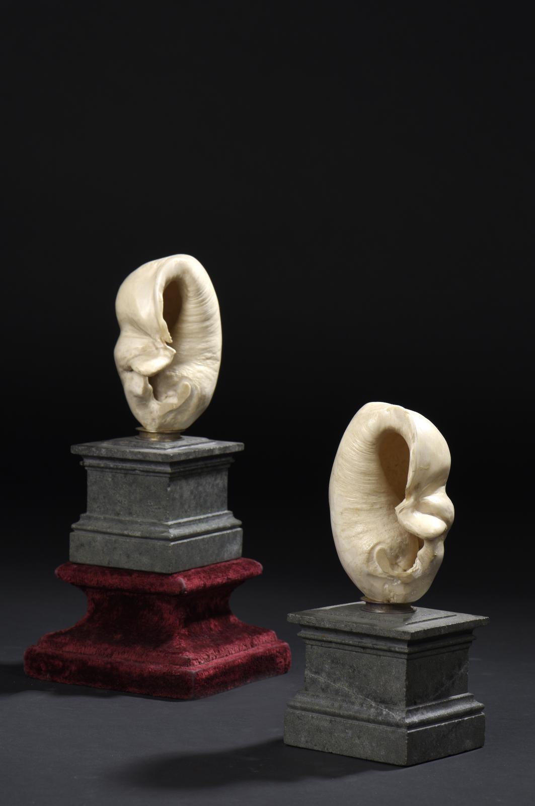 Paire d'os d'oreille de baleine, XVIIIesiècle, montée sur un socle en serpentine, h.20,5et 21cm. Paris, Drouot, 10novembre 2015. DaguerreOVV. M.