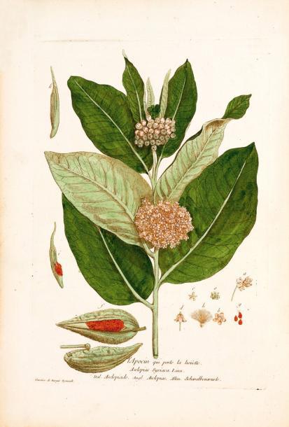 26400€La Botanique mise à la portée de tout le monde, Paris, 1774, 472 planches en couleur par Nicolas-François Regnault et Geneviève de Nangis, et