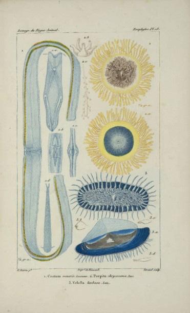 2159€Félix-Édouard Guérin-Méneville, Iconographie du règne animal de G. Cuvier, Paris, 1829-1844,288 planches d'après Guérin et parfois Édouard Trav