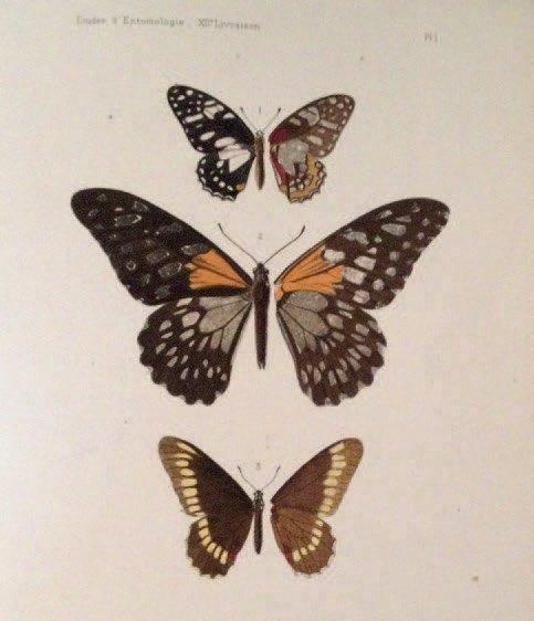 3512€Charles Oberthür, Études d'entomologie. Faunes entomologiques, descriptions d'insectes nouveaux ou peu connus, 1876-1902.Drouot, 20novembre20