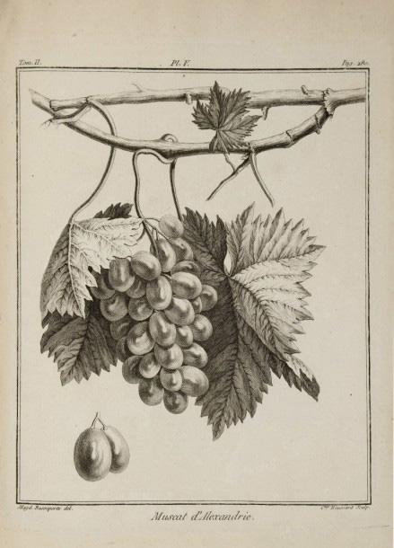 3125€Duhamel Du Monceau, Traité des arbres fruitiers, 1768, Paris, Saillant et Desaint, 182 planches dessinées par Claude Aubriet, Françoise Bassepo