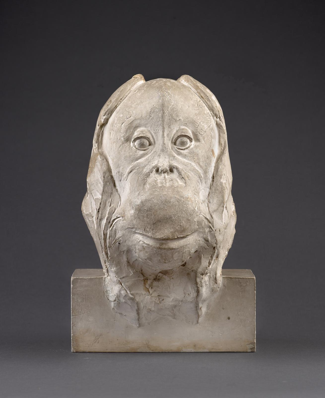 François Pompon (1855-1933), Tête d'orang-outan, 1930, plâtre, 34,5x23x21cm. Galerie Malaquais, Paris