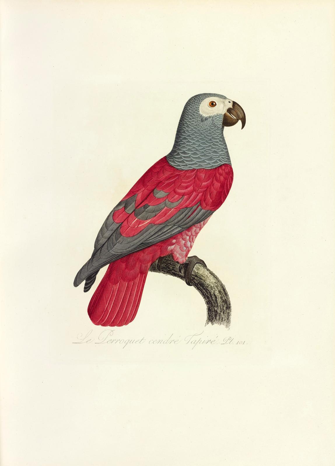 François Levaillant (1753-1824), Histoire naturelle des perroquets {…} Exemplaire retouché d'après les oiseaux du cabinet de M.C. J. Temminck…, Paris