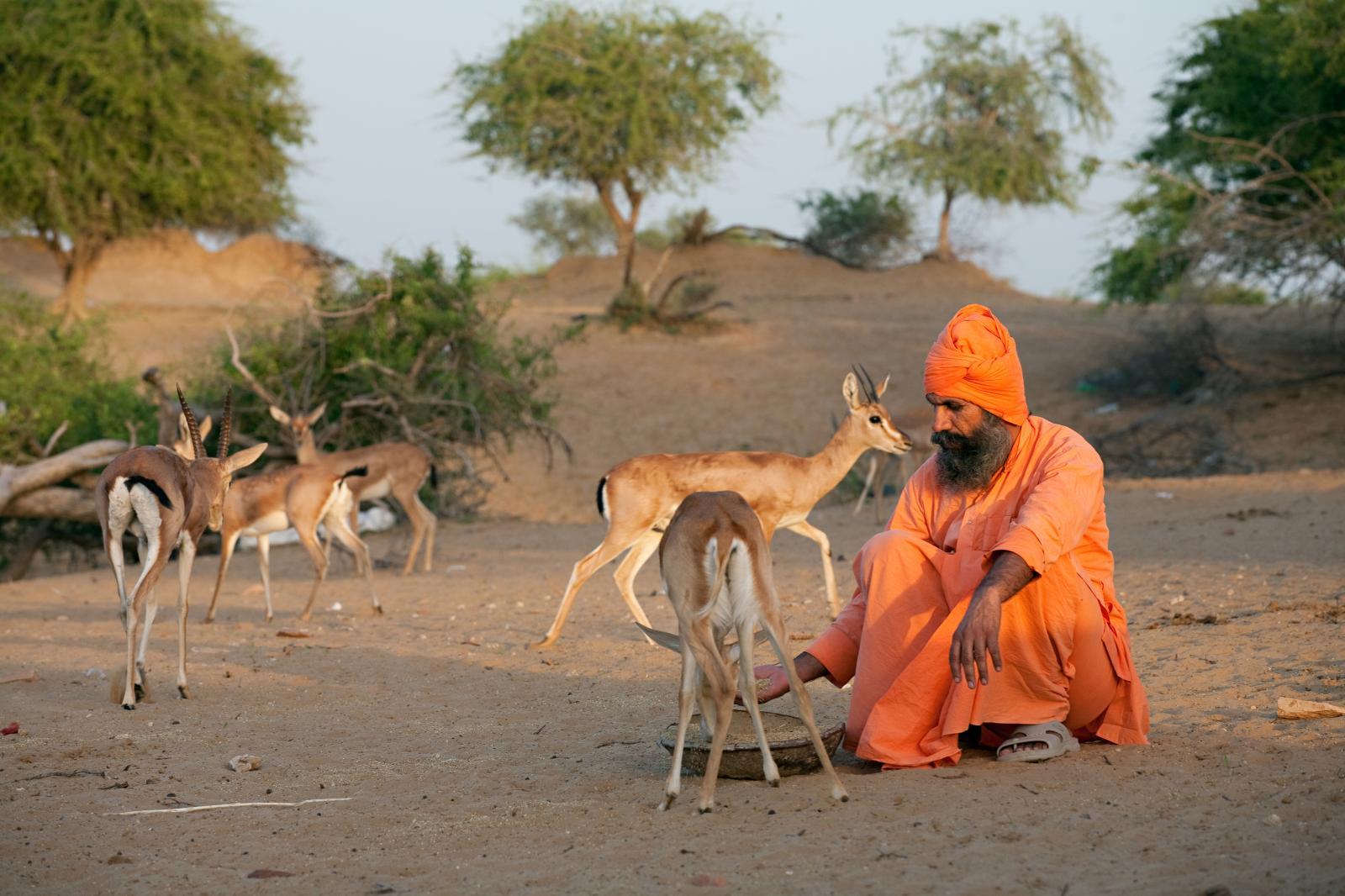 «LesBishnoïs», Prêtre bishnoï nourrissant des gazelles sauvages, Rajasthan, Inde, 2007, 60x90cm.