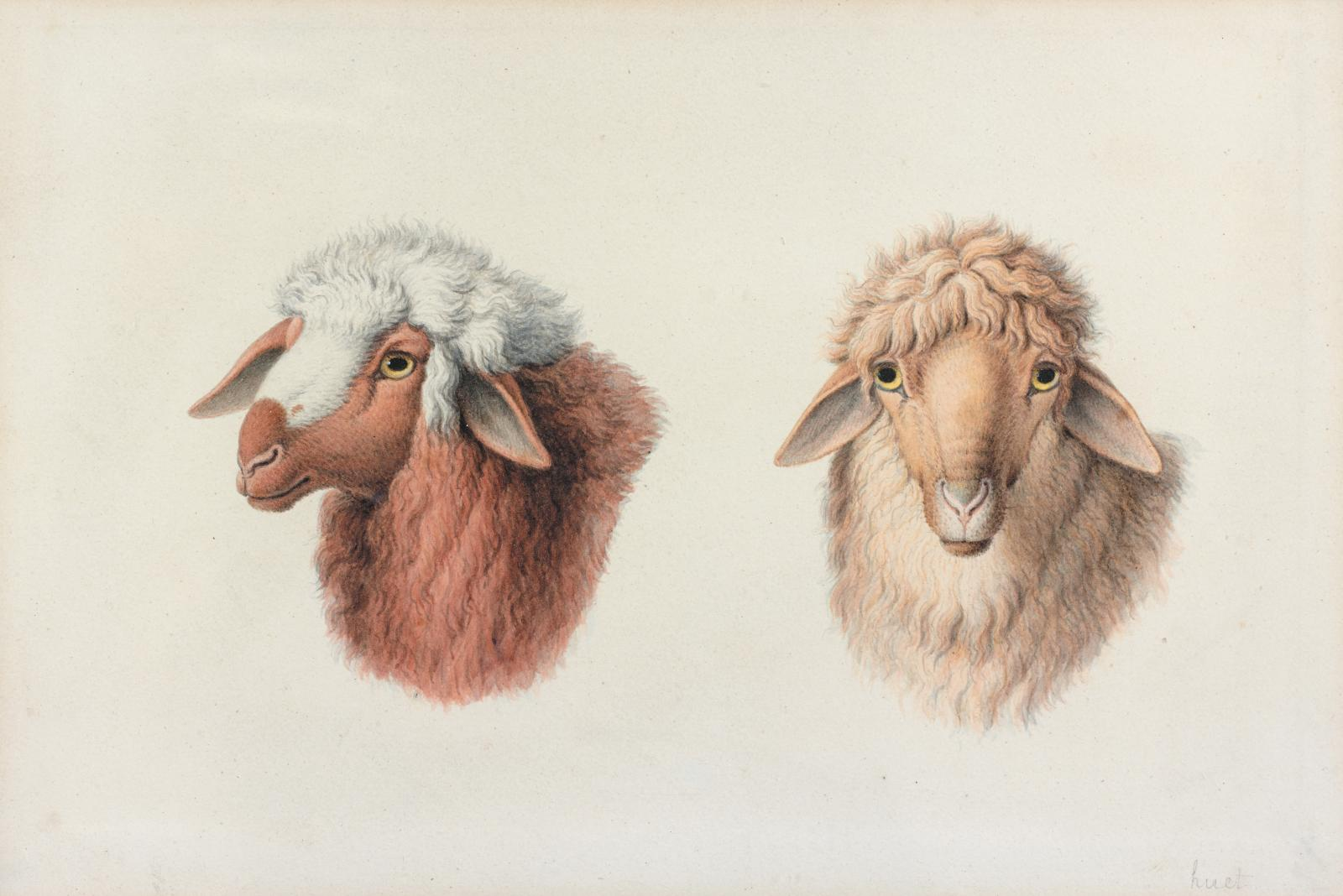 Nicolas Huet (1770-1828), Deux têtes de moutons, pierre noire, crayons de couleur, 16x24cm. Paris, Drouot, 21 mars 2014 Audap & Mirabaud OVV. Cabin