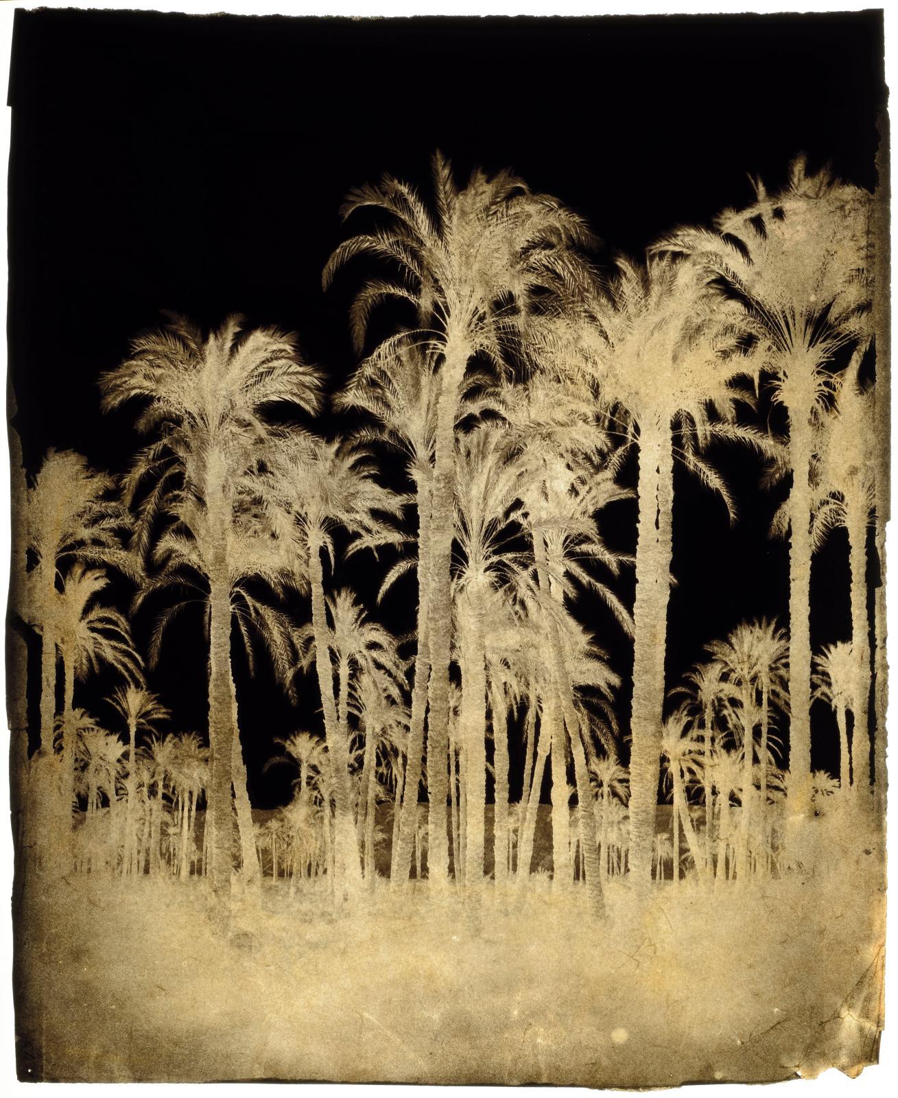 François Joseph Édouard deCampigneulles (1826-1879), Grands palmiers, Nubie, 1858, négatif sur papier ciré, rehauts de gouache noire dans