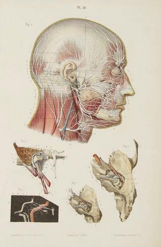 303€ Ludovic Hirschfeld (1816-1876), Traité et iconographie du système nerveux et des organes des sens de l'homme […], Paris, Victor Mass