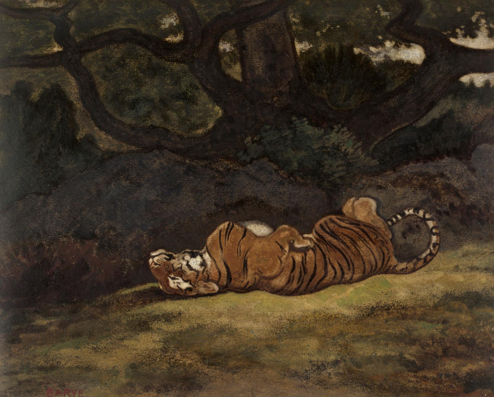 Antoine-Louis Barye (1795-1875), Tiger Rolling, c. 1850-1869, watercolor on moderately textured, moderately thick cream wove paper, 23.8 x