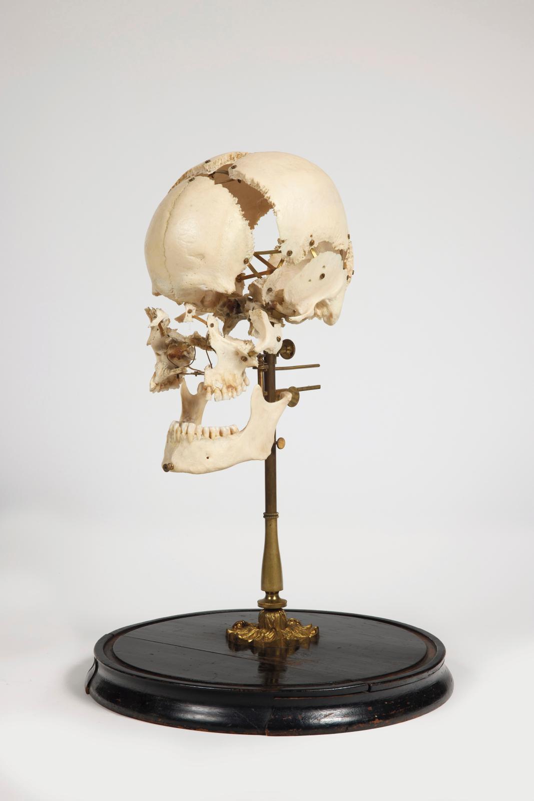 Voici un objet résumant parfaitement l'esprit «décalé» de cette collection. Ce crâne est «anthropométrique» (h.52 cm) c'est-à-dire désart